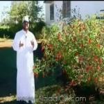 فيديو: الحلقة 6 من (عبدالرحمن الفاتح) وثائقي عن قصة و مسيرة عبدالرحمن السميط مع عبدالعزيز العويد
