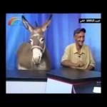 """فيديو: قناة """"أردن المستقبل"""" فضائية أردنية تستضيف (حمار) في برنامج حواري عن قضايا الحمير وعن داعش !"""